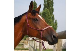 Découvrez Passion-equestre.com
